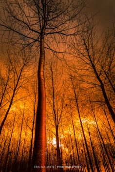 ~~The blaze ~ woods in Haut-Doubs, France by Eric Maupate~~