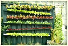 Cheap gutters attached to the wall for plants or water play