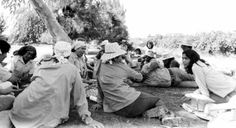 Dolores Huerta organizing grape pickers in the field. Courtesy of Walter P. Reuther Library, Wayne State University