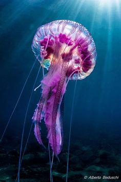 Jellyfish medusa ocean purple ocean sensory bin activity for kids Underwater Creatures, Underwater Life, Ocean Creatures, Cool Sea Creatures, Underwater Drawing, Underwater Animals, Beautiful Creatures, Animals Beautiful, Cute Animals