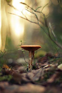 ✯ Ce champignon, simple et fragile, fait toute la beauté de ce décors...Imaginez maintenant toute la différence que votre présence peut signifier, dans la vie de quelqu'un qui vous aime !!!