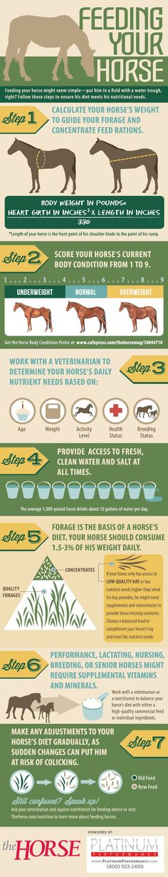 Great Basic Information ...  [INFOGRAPHIC] Feeding Your Horse - Learn how to feed your horse with this #infographic from TheHorse.com and @Susan Brown Performance! #horses #feedinghorses