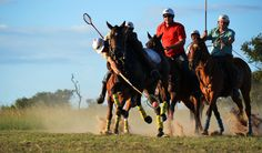 Gathering with all the top Polocrosse players at Antelope Park. A weekend with speed and adrenalin! Zimbabwe, Lacrosse, Picture Video, Action, Horses, Pictures, Top, Animals, Photos