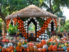 At Tom Thumb Pumpkin Patch, more than 90,000 pumpkins, gourds and squash come together to create Pumpkin Village. Kids will love the hay bale maze and scavenger hunts, as well as Cinderella's Pumpkin Carriage. Located inside the Dallas Arboretum, take time to identify different pumpkin varieties as part of the Great Pumpkin Search.