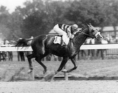 1919 Triple Crown winner Sir Barton ran 31 times, with 13 wins, 6 seconds, 5 thirds, and earnings of dollars. Virtual Horse Racing, Horse Race Game, Triple Crown Winners, American Pharoah, Derby Winners, Sport Of Kings, Thoroughbred Horse, Racehorse, Courses