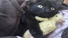 Lost+Kitten+Who+Almost+Drowned+in+the+Ocean+Gets+Adopted+by+the+Brave+…