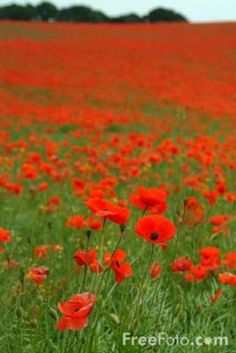 I am so excited to plant so poppies in the fall!!!