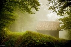 The House in the Forest by Jan Geerk on Spooky Woods, Forest House, Outdoor Furniture, Outdoor Decor, Country Roads, Park, Parks, Backyard Furniture, Lawn Furniture