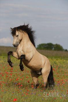 pystyssä oleva hevonen