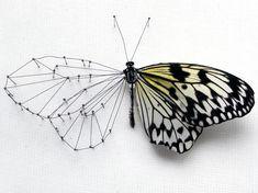Broken Butterflies por Anne ten  Donkelaar