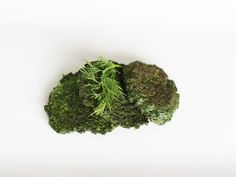 With some time and effort, you could probably shape these Swiss chard fritters into gorgeous, perfectly round discs. But here's the thing - they're going Low Carb Side Dishes, Side Dish Recipes, Veggie Recipes, Whole Food Recipes, Breakfast Bites, Unprocessed Food, Primal Recipes, Sausage And Egg, Paleo Meals