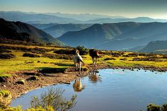 Pura naturaleza en el Occidente de #Asturias. Sierra de La Bobia   Foto de © Pablo López / Fotografi-ando en Facebook