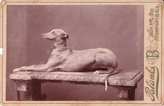 Google Image Result for http://cabinetcardgallery.files.wordpress.com/2011/06/greyhound.jpg