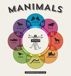 Manimals Infographic