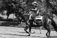 Bilder im Beritt Horses, Animals, Photoshoot, Pictures, Animaux, Animales, Horse, Animal, Dieren