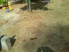 Lazio: #Fiuggi #parco #giochi pieno di escrementi animali. Occorre intervenire subito (link: http://ift.tt/2bMsJpi )