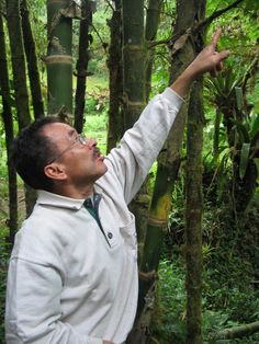 This is Pedro - one of EarthTreks' wonderful nature guides, who will accompany us on a deep nature hike in Mindo, through the trail system of Mindo Lindo.