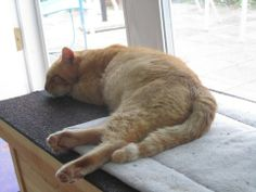 """Lance finally """"agreed"""" to spend time in a sun room instead of sleeping outside."""