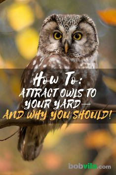 to Attract Owls to Your Yard and Solve Your Pest Problem Owls and other birds of prey can be a great asset to your property for keeping out pests. Learn how to attract owls to your yard,Pest Pest or The Pest may refer to: Garden Owl, Garden Boxes, Garden Animals, Garden Whimsy, Garden Junk, Herb Garden, Vegetable Garden, Garden Ideas, Owl Box