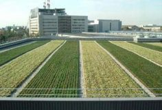 rooftop-farm3 pinned by @dakwaarde