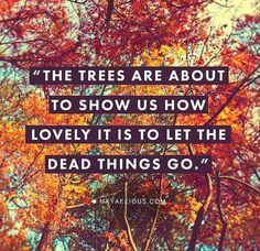 Take a lesson from the trees.