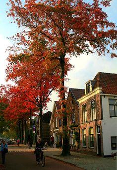 Fall in Weesp, Netherlands Copyright: Gerrit van der Linden