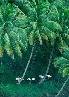 Coqueiros, praia, verão