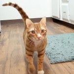 """Cats say """"I Love you"""" to their humans all the time. Learn how kitties show their affection with the help of furry cat video stars Cole & Marmalade."""