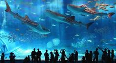Aquarium Barcelona where there is an 80 meter long underwater tunnel!