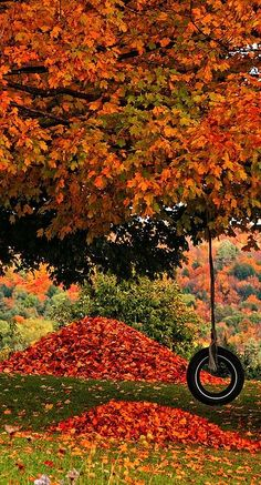Autumn - beautiful fall tree with a tire swing....