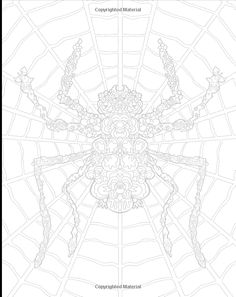 Complicated Spiders Anti Stress Coloring Book Amazonco