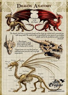 Dragon Anatomy by Anne Stokes - Dragons Magical Creatures, Fantasy Creatures, Fantasy Dragon, Fantasy Art, Dragon Anatomy, Dragon Sketch, Dragon Artwork, Dragon Drawings, Wolf Drawings