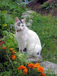 Every garden needs a cat
