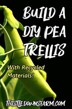 The bigger the trellis, the bigger your peas will be able to grow.  And the best part about a trellis is you can really build one out of anything!  This project gives you the opportunity to get really creative and even recycle some old materials you have laying around so you don't have to break the bank.  Check out this article and get inspired to build your own DIY pea trellis! Learn more about backyard gardening at ThistleDownsFarm.com | #peatrellis #backyardgarden #raisedbed #diygardening Gardening For Beginners, Gardening Tips, Pea Trellis, Xeriscaping, Living Off The Land, Fruit Garden, Grow Your Own Food, Easy Garden, Chickens Backyard