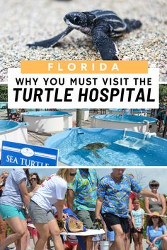 Visit the Loggerhead Marine Life Center, the Turtle Hospital in #Juno Beach #Florida. One of the more rewarding visits and things to do in Florida, This Turtle Hospital is home to a sea turtle research, rehabilitation, education and conservation center. Open to the public, with a public visitor center and gift shop, there are also public engagements like beach clean ups and turtle release to the sea events that you can attend. Usa Travel Guide, Travel Usa, Travel Tips, Travel Destinations, Travel Ideas, Travel Inspiration, Vacation Places In Usa, Honeymoon Tips, Juno Beach