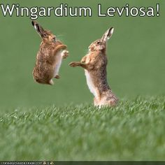 Funny Wingardium Leviosa Spell Collection. #rabbit #wingardiumleviosaspell #wingardium #leviosa