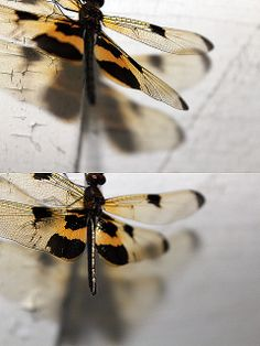 dragonfly | Flickr - Photo Sharing!