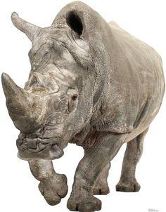 White Rhinoceros Lifesize Standup