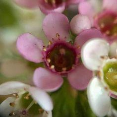 Illustration, Plants, Illustrations, Flora, Plant