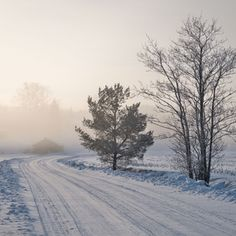 Little forge Dog Walking, Mists, Outdoors, Snow, Nature, Image, Naturaleza, Outdoor Rooms, Nature Illustration