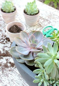 Succulent Container Garden - Tips for Planting Succulents - Satori Design for Living