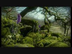 La lenta belleza de las plantas (nuestroviaje-alive.blogspot.com). Video by tanavoltan.