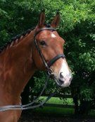 2004 Oldenburg Gelding by Sunny Boy (Sandro Hit), trained through PSG/I-I. Forward thinking, light to the aids and piaffe and passage are started. Suitable for a professional or Amateur rider! $95,000