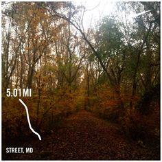 I absolutely love fall! #trailrunning #susquehanna #susquehannatrails #running #fallcolors by kgharks