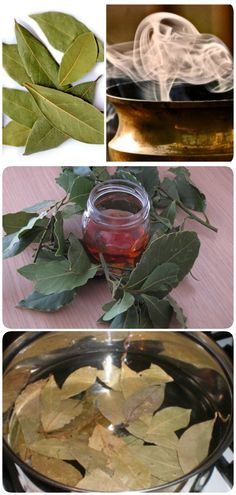 Такое лекарство должно быть в каждом доме! - interesno.win Get The Look, Home Remedies, How To Find Out, Plant Leaves, Beauty Hacks, Skin Care, Make It Yourself, Food And Drink, Health