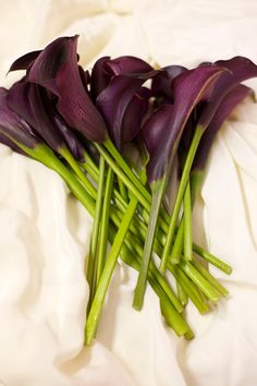 Wine-Colored Mini Calla Lilies