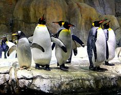Zoo Omaha NE | ... Doorly Zoo: Like Taking a Trip around the World without leaving Omaha
