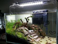 lover Freshwater Plants, Led Aquarium Lighting, World Water Day, Good Job, Fresh Water, Planters, Aquarium Led Lighting, Planter Boxes, Soda