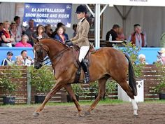 Midwave Resistance - Champion at Sydney Royal, Grand Nationals and Runner up EA National Show Hunter Galloway.
