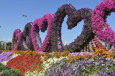 DUBAI MIRACLE GARDEN & BUTTERFLY GARDEN: PLACES TO FALL IN LOVE WITH|  Dubai Miracle Garden istheworld's largest botanical garden.There are about 100 million flowers along 72,000 square meters, which make up sculptures in the most varied shapes and forms, such as …